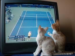 2 cats tv